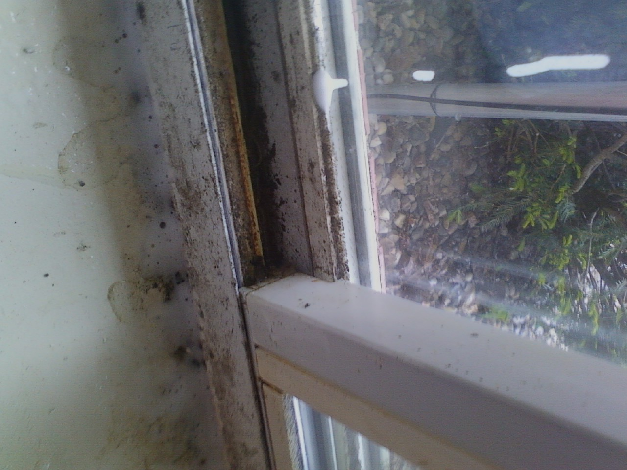 mold on windows and walls- before