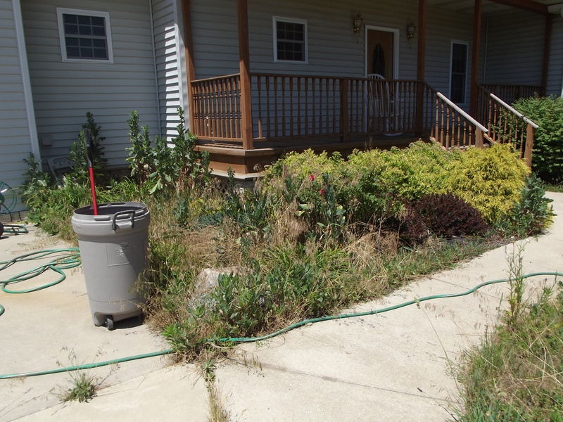 weeds have taken over